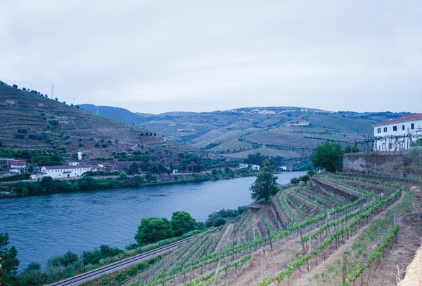 A fantástica colheita de 2011 no Douro